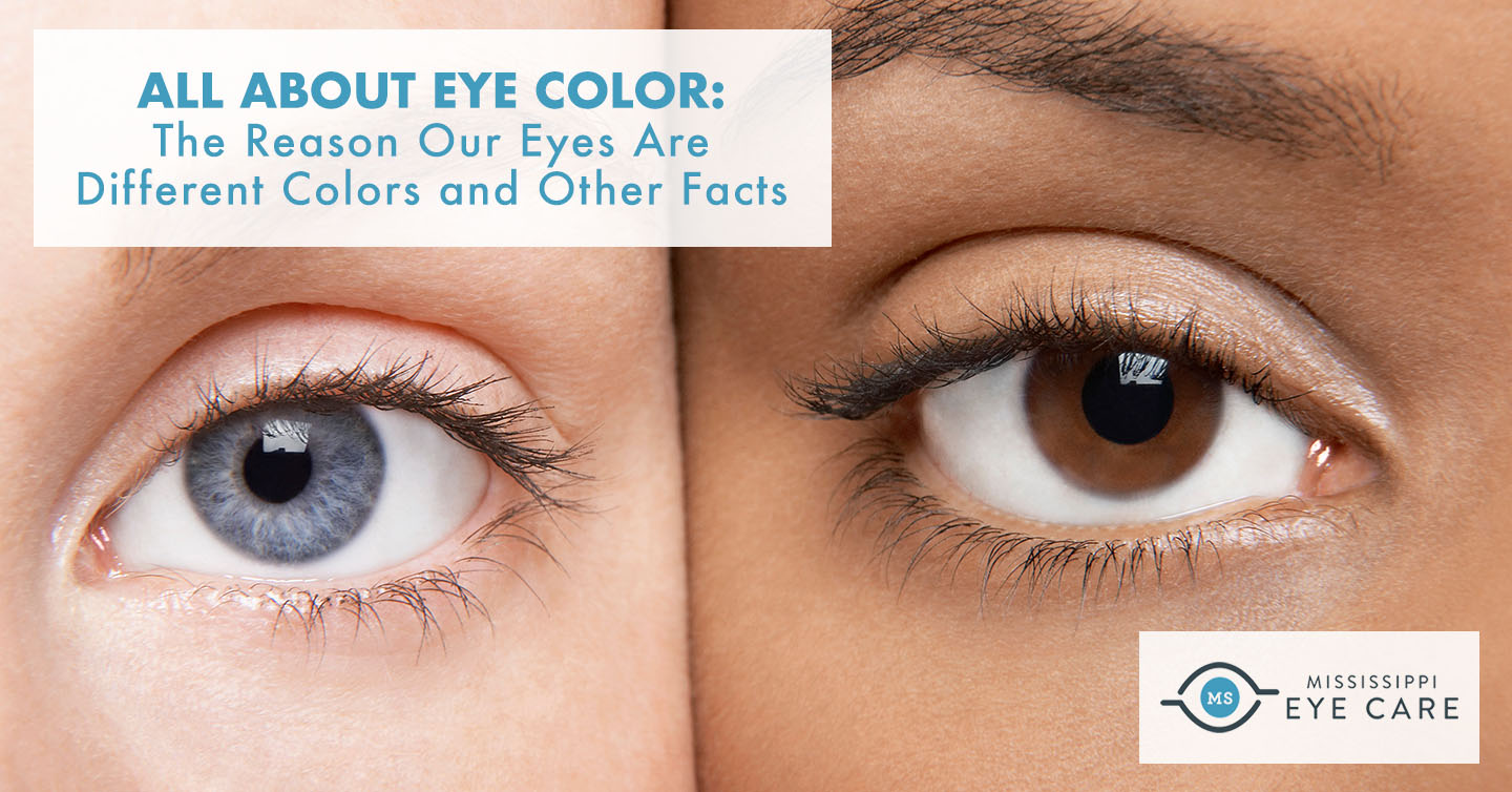 Read more about the article All About Eye Color: The Reason Our Eyes Are Different Colors and Other Facts